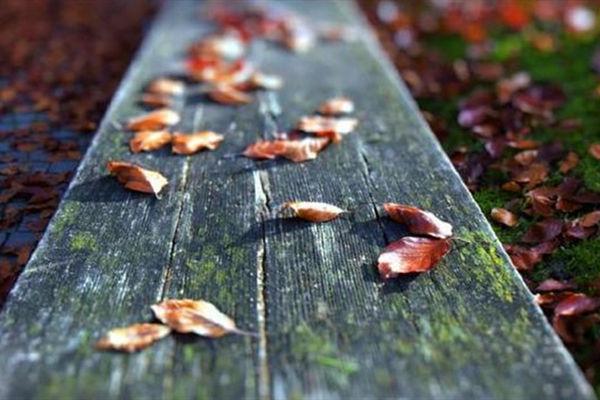 选你最有感觉的落叶,看你是否让人留恋
